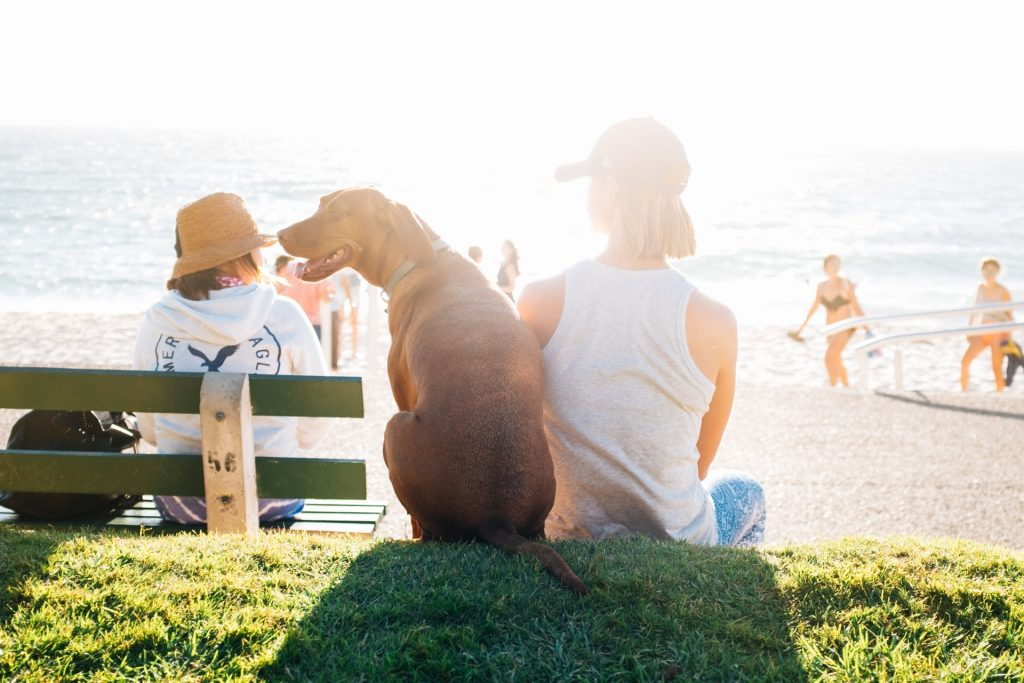 The 5 Best Dog Parks in Tampa Bay